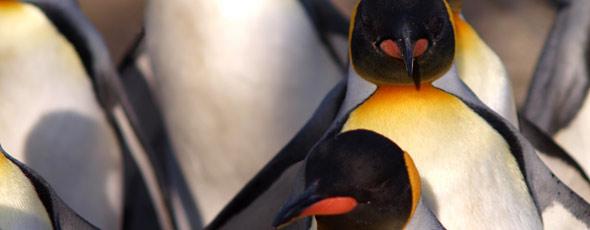Las claves de Google Penguin 2.0 para el posicionamiento online